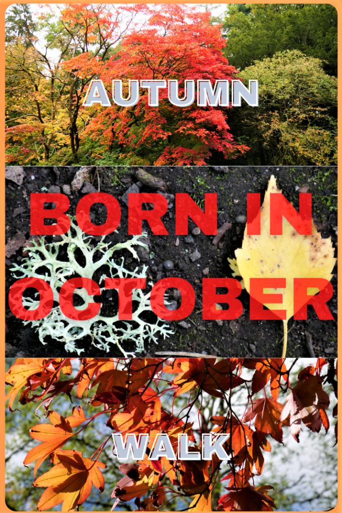 Autumnal walk pin