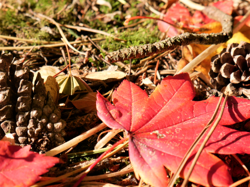 Rustling leaves on an autumn walk