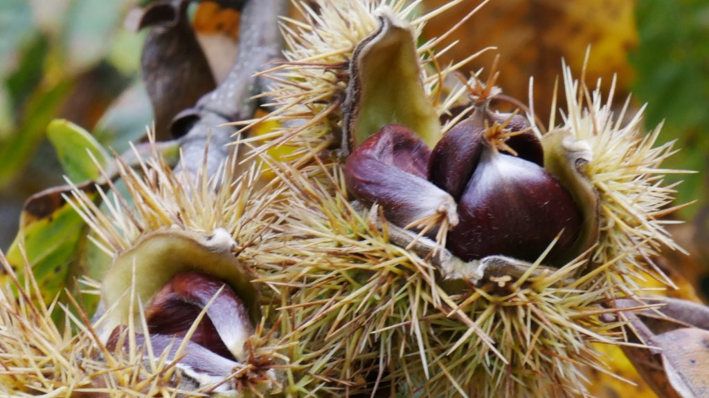 Wild plants; medicinal use of plants
